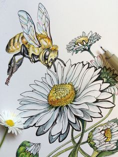 Abeille Marguerite - World of Animals Bee Drawing, Nature Drawing, Drawing Sketches, Painting & Drawing, Art Drawings, Sketching, Art Inspo, Bee Art, Insect Art