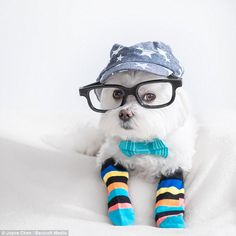 Here Toby jazzes up an outfit with a bow tie and a colorful pair of socks