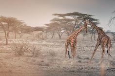 Kenyan Dust by Edoardo Panella on 500px