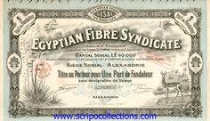 Egyptian Fibre Syndicate SA