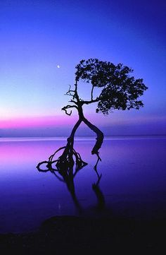 Dancing Tree ♪♫ www.pinterest.com/wholoves/Dance ♪♫ #dance
