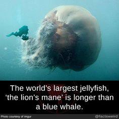 Weird Facts, mindblowingfactz: The world's largest. Wow Facts, Wtf Fun Facts, True Facts, Random Facts, Random Animal Facts, Crazy Animal Facts, Weird Science Facts, Crazy Facts, The More You Know