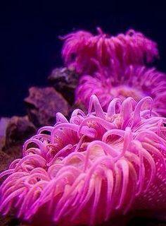 Pink Sea Anemones | Sea Soiree Inspiration