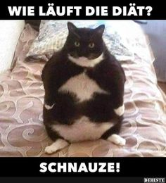 fat cats funny, funny cat memes, funny diet quotes, baby fat, fat kid m. Funny Animal Memes, Funny Animal Pictures, Funny Animals, Cute Animals, Funny Memes, Funniest Animals, Pet Memes, Fat Cats, Cats And Kittens