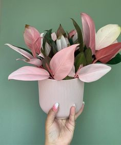 Plant inspiration the controversial but beautiful Philodendron Pink Congo! House Plants Decor, Plant Decor, Cactus Decor, Cactus Art, Cactus Flower, Potted Plants, Garden Plants, Cactus Plants, Foliage Plants