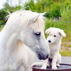 Horses Are Amazing