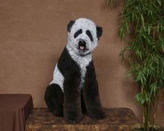 Now, we're not talking about a shampoo and a nail clip, CRAZY dog grooming is much more than that - it turns dogs into panda bears or turtles or buffalos. Is crazy dog grooming cool or dog torture? Poodle Grooming, Cat Grooming, Poodles, Extreme Pets, Panda Dog, Panda Bears, Creative Grooming, Silly Dogs, Dog Halloween