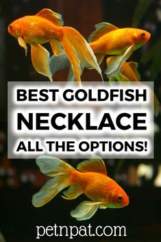 Get the real deal Dave Portnoy goldfish necklace in support of Randolph the Goldfish. Aquarium Stand, Aquarium Fish Tank, Animals For Kids, Animals And Pets, Farm Animals, Aquarium Design, Aquarium Ideas, Fish Tank Themes, Fish Tank Stand