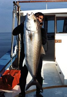 Greater amberjack are fighting monsters