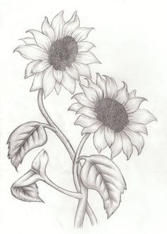 best 25 sunflower drawing ideas on sunflower tattoos Pencil Drawings Of Flowers, Cool Art Drawings, Pencil Art Drawings, Art Drawings Sketches, Easy Drawings, Drawing Flowers, Drawing Pictures, Realistic Flower Drawing, Sketches Of Flowers