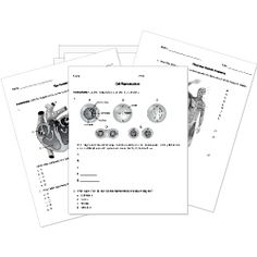 174 best Free Printable Worksheets images on Pinterest in