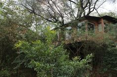 The Tree House Resort, Jaipur - Back to the Nature!