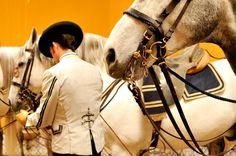 Fundación Real Escuela Andaluza del Arte Ecuestre - Book de Caballos #horses #caballos #AndalusianHorses #Spain #Jerez