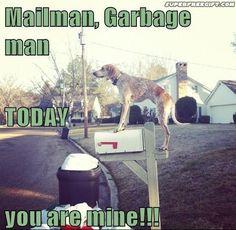 Pinterest Humor Dogs | Animal Humor / Beware the dog