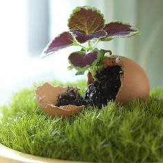 recycling egg shells for table decorations and flower centerpieces