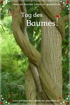 Hinterm Bild gibt es mehr zu lesen! #SinndesLebens #derSinndesLebens #schönenSonntag #Freude #Zeit #Sonntagsgrüße #TagdesBaumes #Baumsonntag #Bäume #wundervolleBäume #großeBäume #unvergesseneBäume #magischemMomente #magischeEnergie #dieMagiederBäume #großartigeAugenblicke #SonntagsunterBaum #dasLebenverstehen #Baumenergien #hineinfühlen #sichselbstsehen #lieben #freuen #genießen #Natur #staunen #herausnehmen #bewältigen #denBäumendanken #Baummagie Plants, Positive Feelings, Beautiful Nature Pictures, Meaning Of Life, Happy Sunday, Nice Asses, Plant, Planets