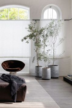 Tree for Living Room Luxury the 16 Best Indoor Trees for Every Kind Of Plant Parent Indoor Tree Plants, Best Indoor Trees, Big Plants, Bamboo Plants, Trees To Plant, Office Plants, Interior Plants, Dining Room Design, Plant Decor