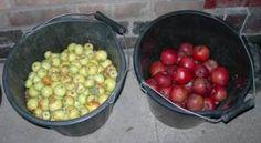 homemade cider-no press