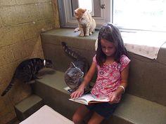 Questi bambini leggono i libri ai gatti. Sembra stupido finchè non sai il perchè. - reading children shelter cats book buddies 13