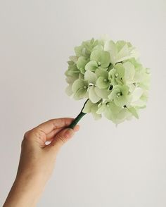Hortênsia - Hydrangea  #paperflowers #larspaperflowers #dsfloral #floresdepapel #cartotecnicarossi #cartefini