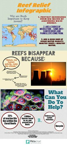 Reef Relief Infographic for the Grand Cayman Island Barrier Reefs Grand Cayman Island, Save Water, Carbon Footprint, Go Green, Something To Do, Drugs, Infographic, Easy, Infographics