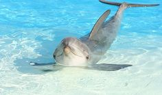 Delphin Shadow starb im vergangenen November im Conny-Land.