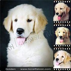 Fotografia de incrível Lionel Falcon! #dogs #pets #fotografias #photography  #pictures  #imagens #lionelfalcon #photos #fotos