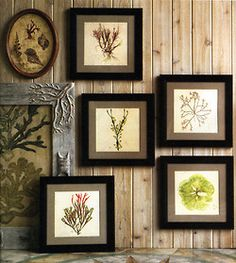 press herbs, dry,  and frame for kitchen art