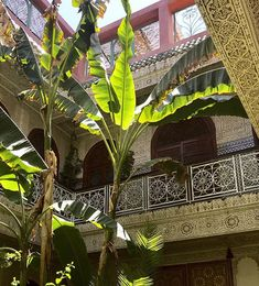 Indoor Plants - Banana