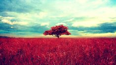 Lonely Tree Red Leaf and Reed Blue Sky Colorful Vintage Photography Wallpaper HD for Desktop