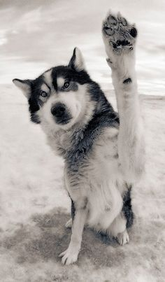 Doggy high five!