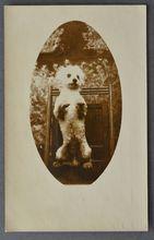 AZO RPPC Postcard Posing Dog