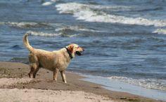 Cape Cod Dog Friendly Beaches