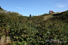 Monhegan Moorland - well, technically this is right across the harbor in the middle of tiny Manana Island. The tangle of vines covering this shallow gorge made for slow going, but it is worth the ride over.