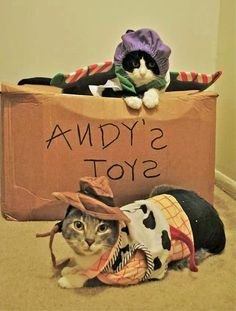 Buzz and Woody. #cute #cats #halloween