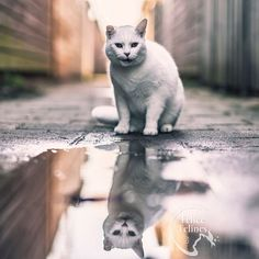 Stunning cats portrait photography Felicity Berkleef . check out her beautiful photos of cats Feral Cats, Portrait Photography, Personality, Photo And Video, Animals, Beautiful, Check, Photos, Animales