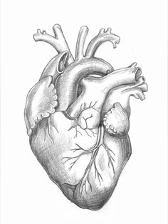 Pictures of human heart pencil drawing - Heart Pencil Drawing, Human Heart Drawing, Realistic Pencil Drawings, Pencil Art Drawings, Art Drawings Sketches, Anatomy Art, Anatomy Drawing, Heart Sketch, Human Pictures