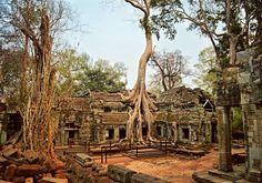 The Ta Prohm temple, Angkor Wat, Cambodia