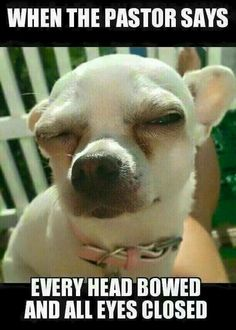 The Chihuahua is basically a dog's breed. The reason of attraction of Chihuahua is his small size, coat varieties and colors. Chihuahua memes are famous because of his funny face and expressions. Funny Church Memes, Church Humor, Funny Memes, It's Funny, Funny Quotes, Funny Christian Memes, Christian Humor, Christian Pics, Humor Cristiano