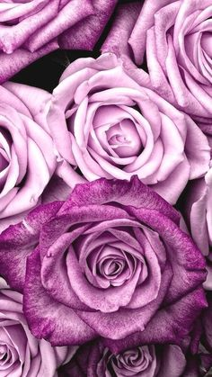 Samsung Wallpaper Floral # Tapete # Tapete Full HD - Best of Wallpapers for Andriod and ios Pastell Wallpaper, Purple Wallpaper Iphone, Et Wallpaper, Purple Flowers Wallpaper, Rose Gold Wallpaper, Flower Phone Wallpaper, Cute Wallpaper Backgrounds, Pretty Wallpapers, Aesthetic Iphone Wallpaper