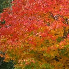 Autumn in America is a beautiful time of year. I have experienced the beauty of autumn in many parts of America and each has it's own special...
