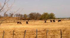 Tras el caso de Riopaila, en Vichada, está de por medio cuál es el modelo de desarrollo rural más conveniente. Vineyard, Outdoor, Lawyers, Houses, Outdoors, Vine Yard, Vineyard Vines, Outdoor Games, The Great Outdoors