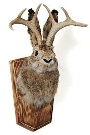 always wanted my own jackalope