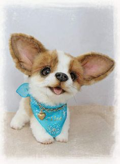 Chico the chihuahua puppy by By Jelena K.   Bear Pile