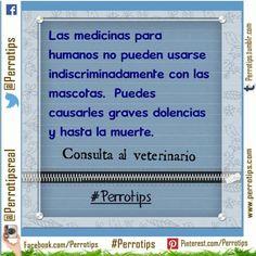 No es lo mismo escogerles un champú que una medicina. No lo mediques sin saber #perrotips
