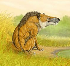Andrewsarchus, An extinct mammal with an enormous skull; possibly the largest land dwelling carnivorous mammal known.