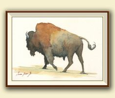 American buffalo . This is a Print of a Buffalo also know Bison, from an original watercolor painting . Wild animal Buffalo. Country life