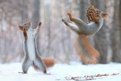 Astonishing Natural Animal Images That Will Reshuffle Your Perceptions