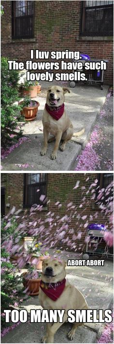 Funny dog has got spring fever. No, wait, that's hay fever!
