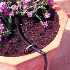 Drip irrigation system for container gardening. Make container gardening easy with these simple steps. Container Design, Container Plants, Container Gardening, Succulent Containers, Container Flowers, Garden Soil, Lawn And Garden, Garden Landscaping, Organic Gardening